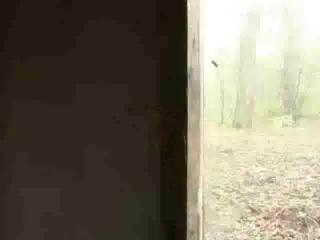 Porn Tube of Fucked In Forest