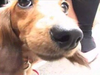 Porno Video of Pet Used For Upskirt